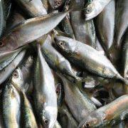 Imagen de pescado, en concreto caballa. Imagen Freeimages