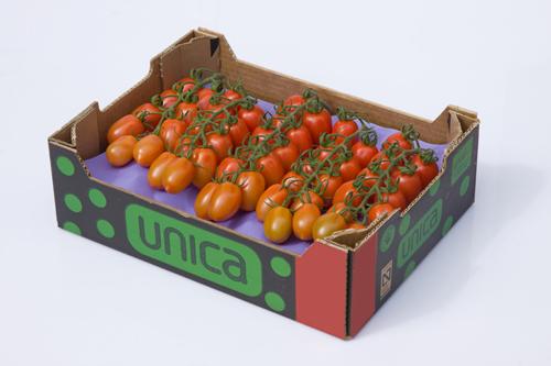 UNICA Group no encuentra techo al cierre de la campaña
