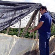 Andrés Góngora observa junto con un agricultor afectado un invernadero caído por el temporal. Foto: COAG Almería