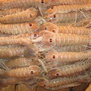 Crustáceos. Imagen: FreeImages
