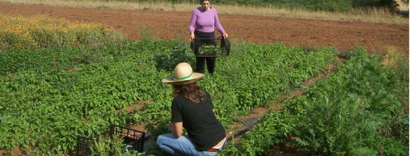 Mujeres trabajando en el campo. Imagen: Ministerio de Agricultura de España.