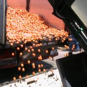 Naranjas. Foto: ASOZUMOS