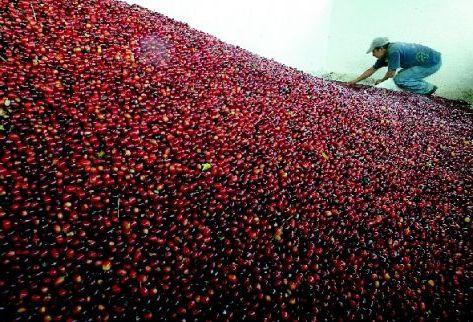 Salvador-exporta-cafe-paises_PREIMA20100315_0002_5