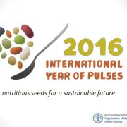 international-year-of-pulses-2016-1-638