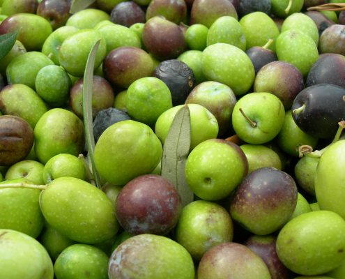 olive-1325228-1920x1440