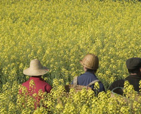 rapeseed-farmers-1433716-638x425