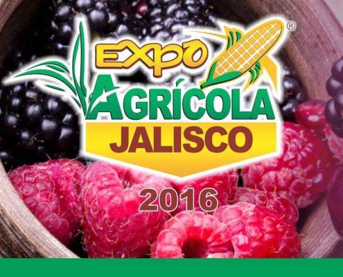 Berries Jalisco