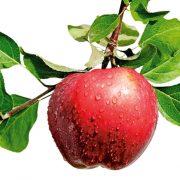 HV Agrofresh Technology