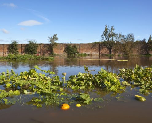 a flooded walled garden in autumn with pumpkins and squashes floating in water with trees and vegetation under a clear blue sky