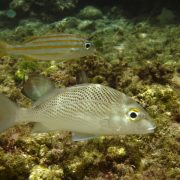 peixe-1398713-640x480