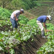 Agricultores CR