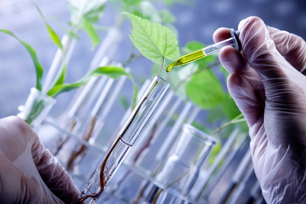 biotechnology in agriculture and food industry International consumer and food industry trends ers conducts research on a number of agricultural biotechnology issues, including.
