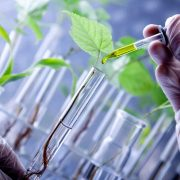 Biotecnología agraria1