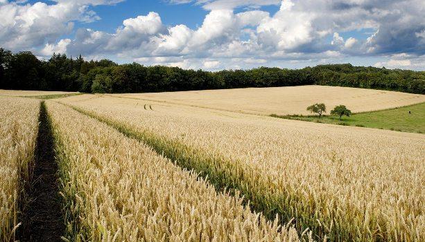 Ifapa estudia mejoras en sostenibilidad agrícola a través de la nanotecnología - eComercio Agrario