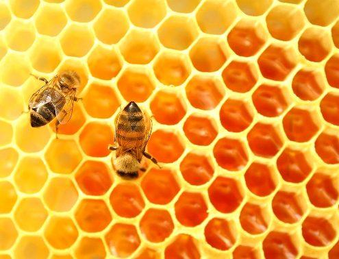 """Luján, Provincia de Buenos Aires. Panal de abejas con miel, en el marco de un control sanitario de colmenas o monitoreo (técnica denominada """"prueba del frasco"""") que se realiza periódicamente en momentos claves del ciclo productivo, por un profesional del Programa Nacional de Sanidad Apícola."""
