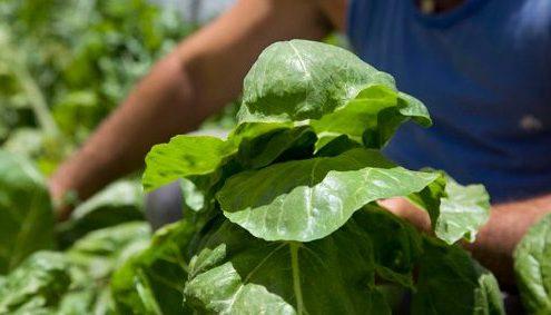 agricultura-organica1