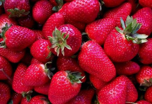 fresas (1)