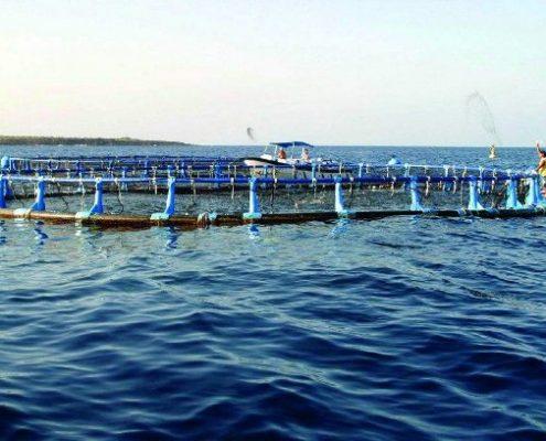 Acuicultura marina en Andalucía