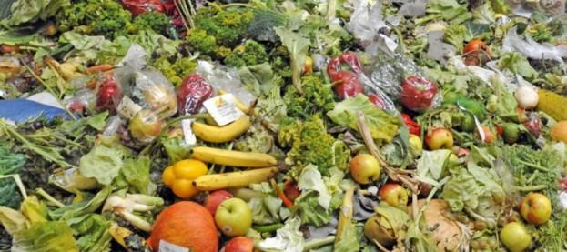 Resultado de imagen para Egipto contra el desperdicio de alimentos