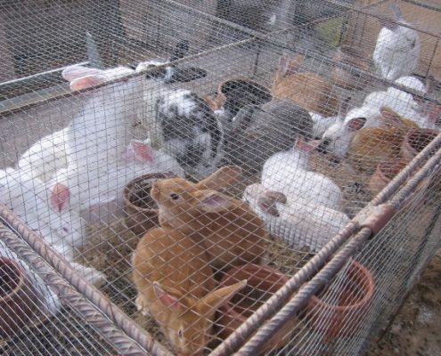 161007_granja conejos