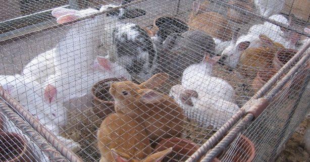 Las Granjas De Conejo En España Se Reducen A La Mitad Ecomercio Agrario