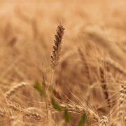 161223_seguros agrarios