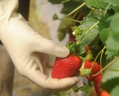 170202_innovación en frutos-rojos