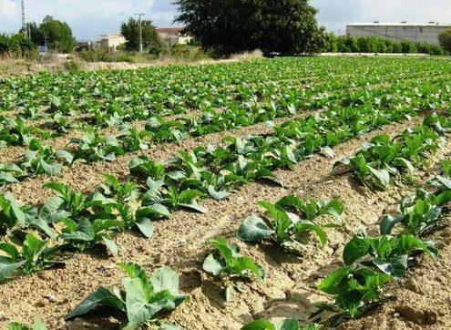 170217 cultivos Murcia