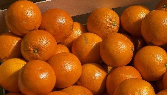 170330_naranjas LA UNIÓ