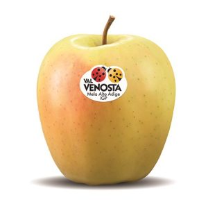 Manzana de la variedad Golden.