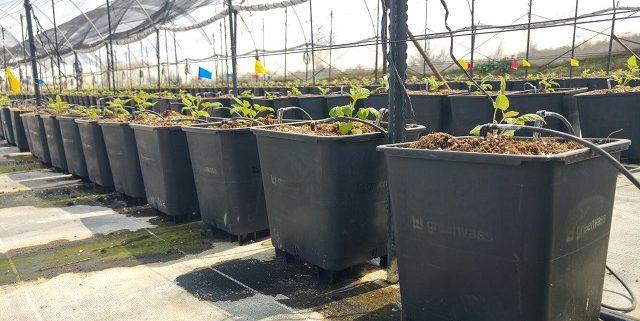170609_macetas Greenvas para cultivo hidropónico