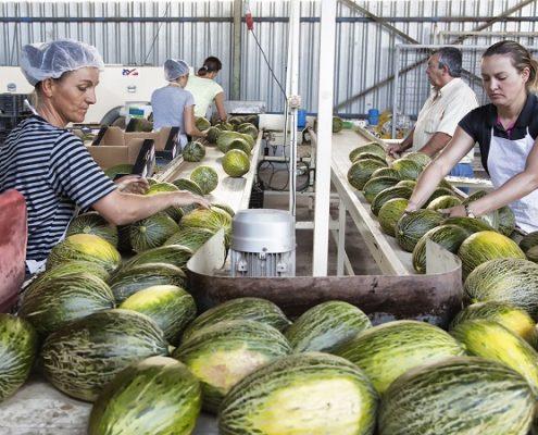 170721_Campaña de melón y sandía CLM