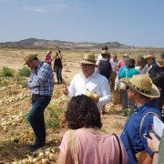 170725_Presentación campaña 2017 Cebolla Fuentes de Ebro