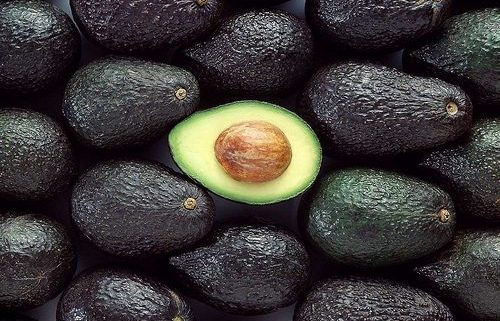 170904_aguacate mexicano