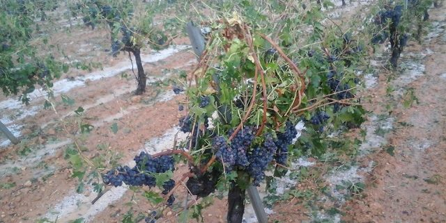 170908_daños por pedrisco en viñedo, almendro y olivar_AVA ASAJA