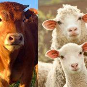 171005_foro hispano chino de la carne de vacuno y ovino