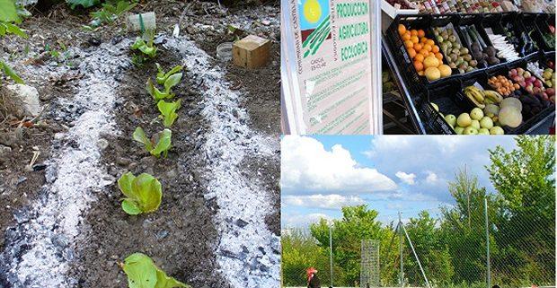 171120_producción ecológica