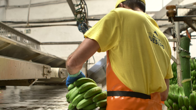 The European producers of banana defend the aid of all the