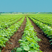 fondos agrícolas