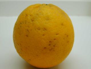 Citrosol