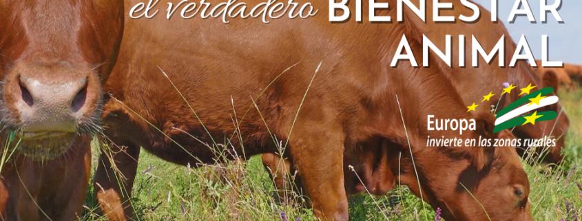 ganadería