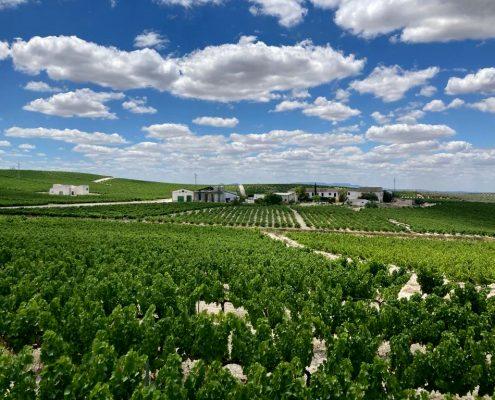 viticultores